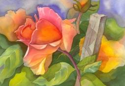Ambleside Rose, Elizabeth Cox