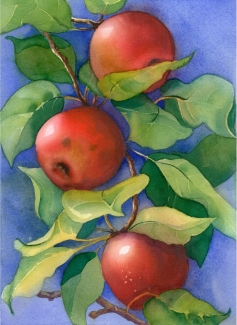 Apples, Elizabeth Cox