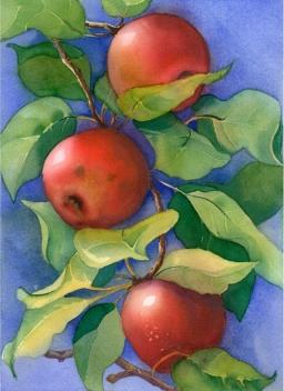 Apples, Elizabeth Cox