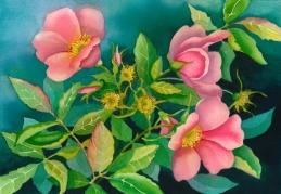 Nootka Roses, Elizabeth Cox