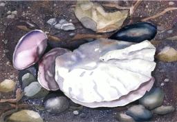 Oyster Shell, Elizabeth Cox