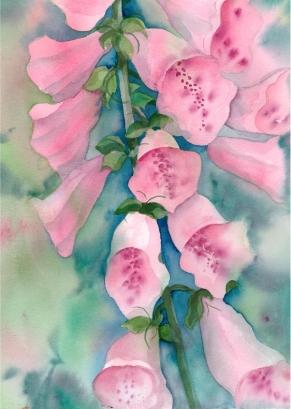 Pink Foxgloves, Elizabeth Cox
