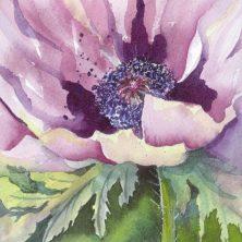 Purple Poppy 7, Elizabeth Cox