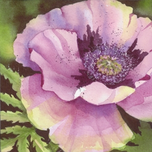 Purple Poppy 9, Elizabeth Cox