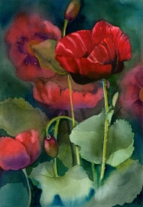 Red Poppies, Elizabeth Cox