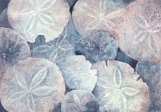 Sand Dollar, Elizabeth Cox