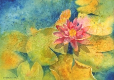 Water Lily, Elizabeth Cox