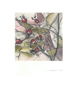 Rose Hips, 11x15 Watercolour on Paper
