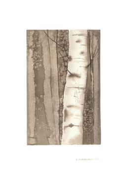 Sepia Birches 1, 15x22.5 Watercolour on Paper