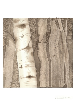 Sepia Birches 2, 15x22.5 Watercolour on Paper