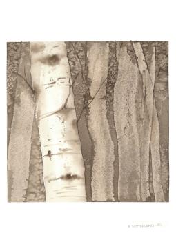 Sepia Birches 2, 15x22.5 Watercolour on Paper