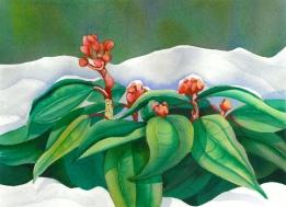 Christmas Rhodo in Snow, Elizabeth Cox