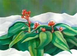 Christmas Rhodo in Snow, Elizabeth Cox